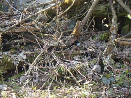 offshoot: heap branch Stock Photo