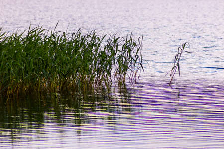 Green grass in the still lake water Stock Photo