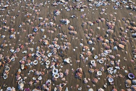 water s edge: conchiglie sulla sabbia del mare