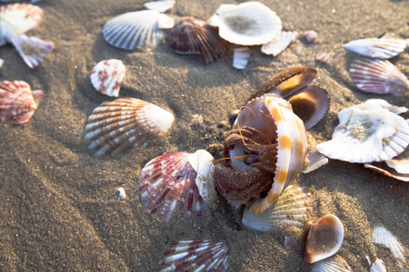 seashells on the sea sand  photo