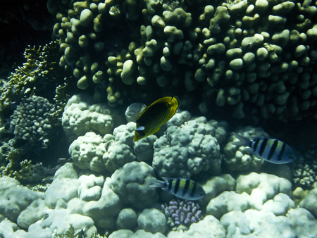 fish and corals Red Sea photo