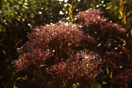 Spring foliage Фото со стока