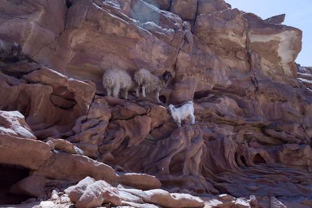 mount sinai: Monte Sinai in Egitto