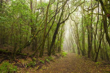 Parc national de Garajonay, La-Gomera, Îles Canaries, Espagne
