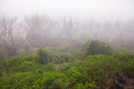Garajonay national park, La-Gomera, Canary Islands, Spain
