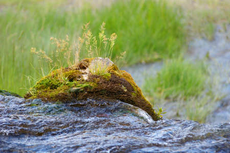 vegetation: Rock with vegetation on the river waterfall Stock Photo