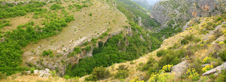 vegetation: Canyon with rocky cliffs and vegetation in Dalmatia, Croatia