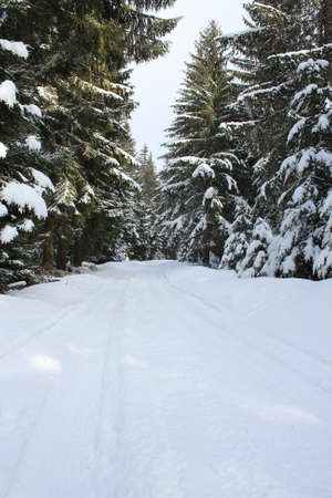 coldness: Snowy road in pines forest Stock Photo