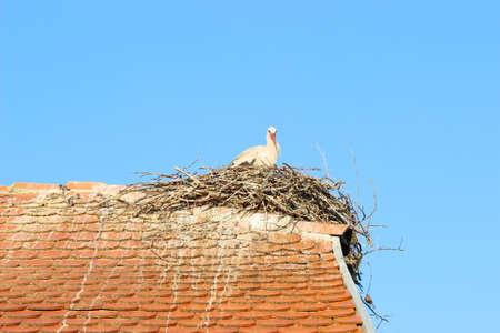 White stork in nest on house roof