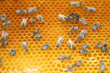 working: Working bees
