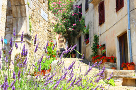 Street with flowers in Motovun, Croatia