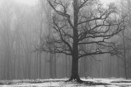 scary forest: Man on the edge of scary forest in foggy winter day