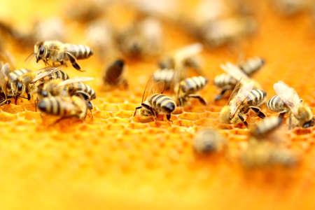 꿀벌 스톡 콘텐츠