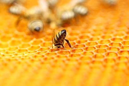 벌집에 벌