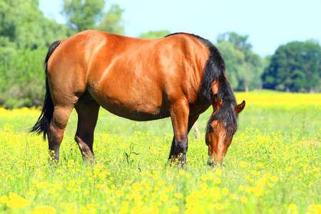 beautiful horse: Beautiful horse on meadow Stock Photo