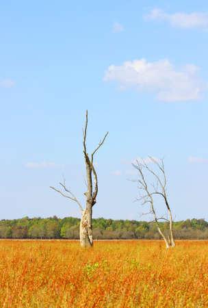 arboles secos: Dos árboles muertos en el paisaje de otoño, la composición vertical