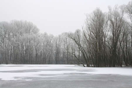 treetops: Winter landscape on frozen lake