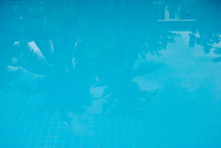 coconut palm sugar: Reflection Shadow of coconut trees and sugar palm tree in swimming pool.