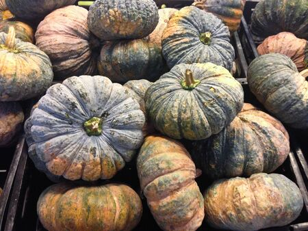 The group of pumpkins, Close up the green pumpkins in market.