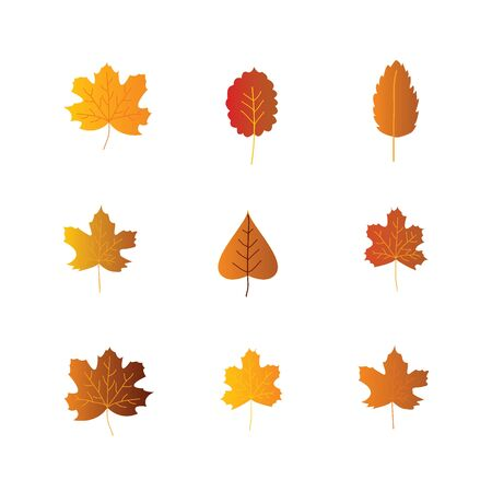 Colorful autumn leaves set, isolated on white background. vector illustration