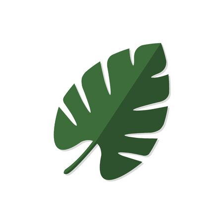 Palm tree leave, Monstera tropical plant on white background vector illustration Reklamní fotografie - 129269307