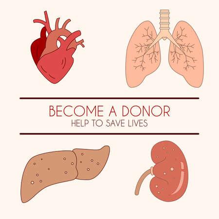 donacion de organos: Ilustración vectorial de un hígado humano, corazón, pulmones y riñón, icono lineal en color. Se puede utilizar para eventos de donantes, infográficos, carteles, pancartas. Diseño simple. Vectores