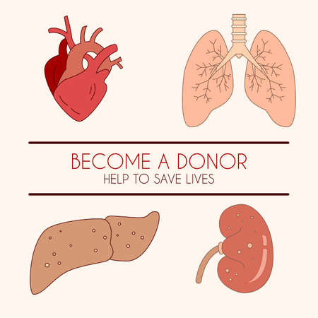 kidney transplant: Vector illustration of a human liver, heart, lungs and kidney, linear icon in color. Can be used for donor events, infographic, poster, banner. Simple design.