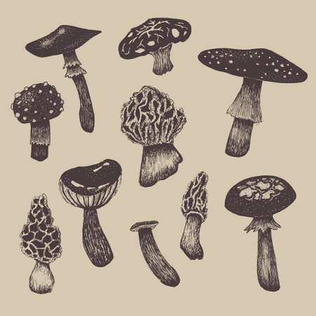 morel: Vector hand drawn collection of various mushrooms. Realistic graphic design for poster, menu or organic products branding.