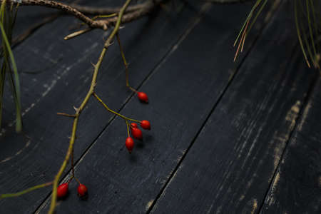 A branch of red thorny rosehip or dog rose on black wooden table background. Immunity, vitamins, diet and healing herbs concept. Place for text.