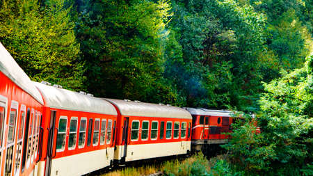 narrow gauge railroads: Travel with train railway in the forest