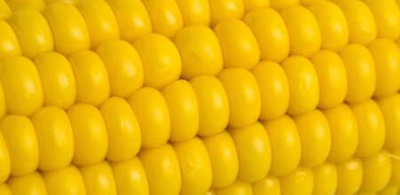 Closeup photo of fresh corn photo