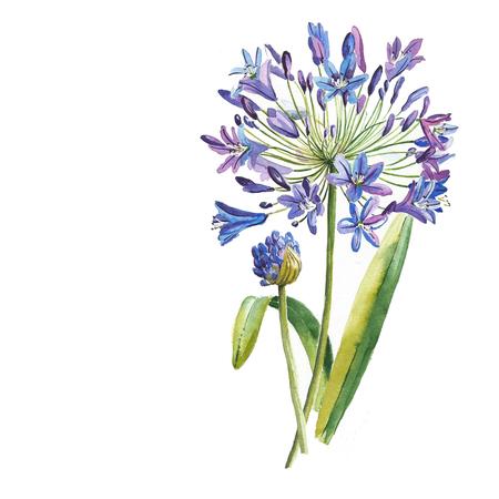 水彩で描かれた青い花