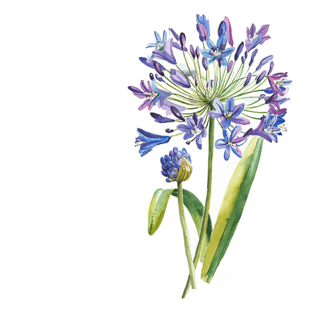 Blue flower painted in watercolor 스톡 콘텐츠
