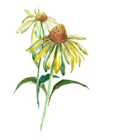dapper: Yellow flower painted in watercolor