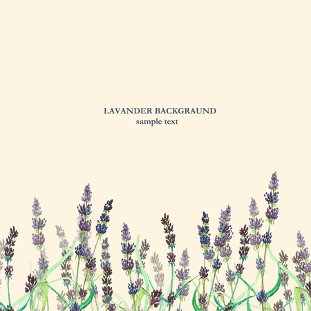 field flowers: Lavander watercolor background