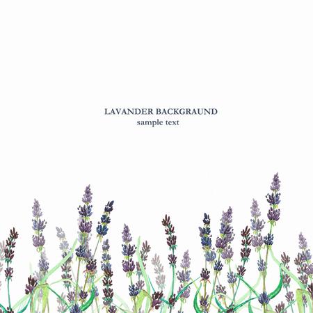 lavander: Lavander watercolor background