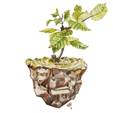 financial advice: Selective focus on Little seedling in black soil. Earth day concept. Ecology. Earth Hour, Spring Time, Planet, CSR, Arbor, Idea, Kind, Globe Shape, Energy, Seedling, Tree, Synergy, Generosity, Farming. Stock Photo
