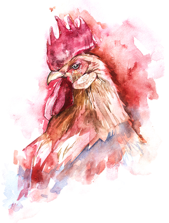 Beautiful colorful and bright watercolor rooster. Hand drawn illustration for your graphic design. Cock - Symbol of New Year 2017. Stock Photo