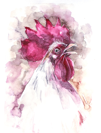 Beautiful colorful and bright watercolor rooster. Hand drawn illustration for your graphic design. Cock - Symbol of New Year 2017. Banco de Imagens
