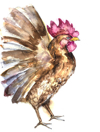 auspicious element: Beautiful colorful and bright watercolor rooster. Hand drawn illustration for your graphic design. Cock - Symbol of New Year 2017. Stock Photo