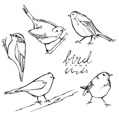 thrush: Hand drawn collection of graphic birds on white background