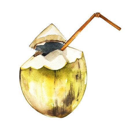 Coconut isolated on white background. Tropical set, Watercolor sketch object