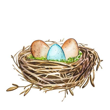 Niebla dibujada mano del pájaro del arte de la acuarela con los huevos, diseño de pascua. Ilustración aislada sobre fondo blanco.