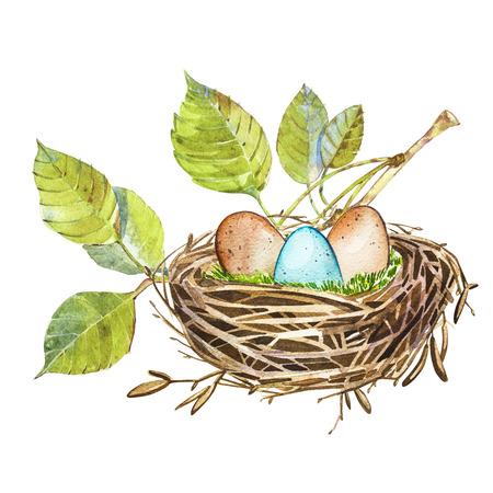 손으로 그린 수채화 아트 조류 둥지 계란, 부활절 디자인. 흰색에 고립 된 그림입니다.