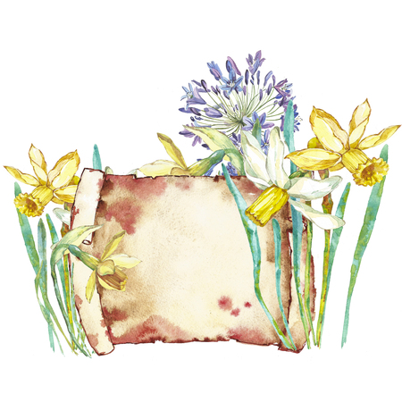 Spring flowers narcissus. Isolated on white background. Watercolor hand drawn illustration. Easter design. Stock Photo