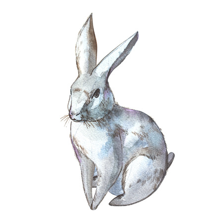 Rabbit. Isolated on white background. Watercolor hand drawn illustration. Easter design. Stock Photo