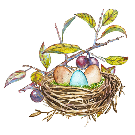 reproduce: Hand drawn watercolor art bird nest with eggs , easter design. Isolated illustration on white background.