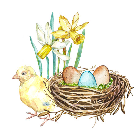 Hand drawn watercolor art bird nest with eggs and spring flowers, rooster, easter design. Isolated illustration on white background. Stock Photo