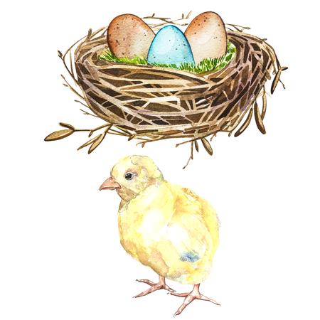 Hand drawn watercolor art bird nest with eggs and rooster, easter design. Isolated illustration on white background.