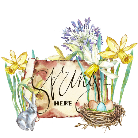 Spring flowers narcissus. Isolated on white background. Watercolor hand drawn illustration. Easter design. Lettering - Spring here. Stock Photo